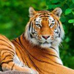 کانال تلگرام عکس حیوانات