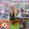 کانال تلگرام lovely animals