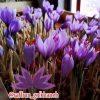 کانال تلگرام زعفران گلخانه ای