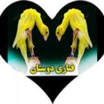 کانال تلگرام قناری دوستان